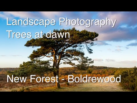 Landscape photography in the New Forest Hampshire at dawn - photographing trees.