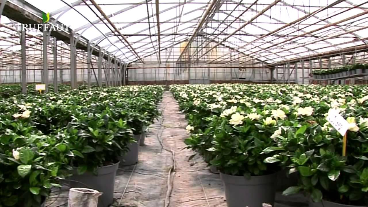 Quel entretien pour le gard nia jardinerie truffaut tv for Plantes jardinerie