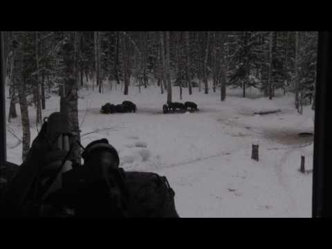 Охота C Pulsar.Guru на оленя с Pulsar Apex XD75
