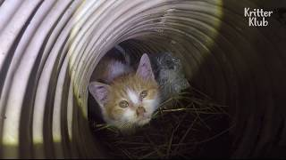 Project Cat Rescue: Kitten Rescued From The Drain   SBS Animal