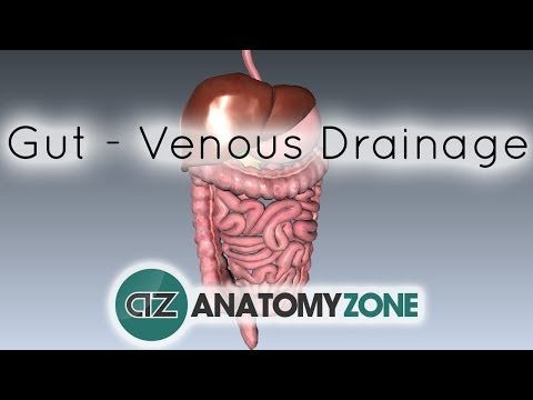 Blood Supply to the Gut (Introduction) - Part 2 (Venous Drainage/Portal System)