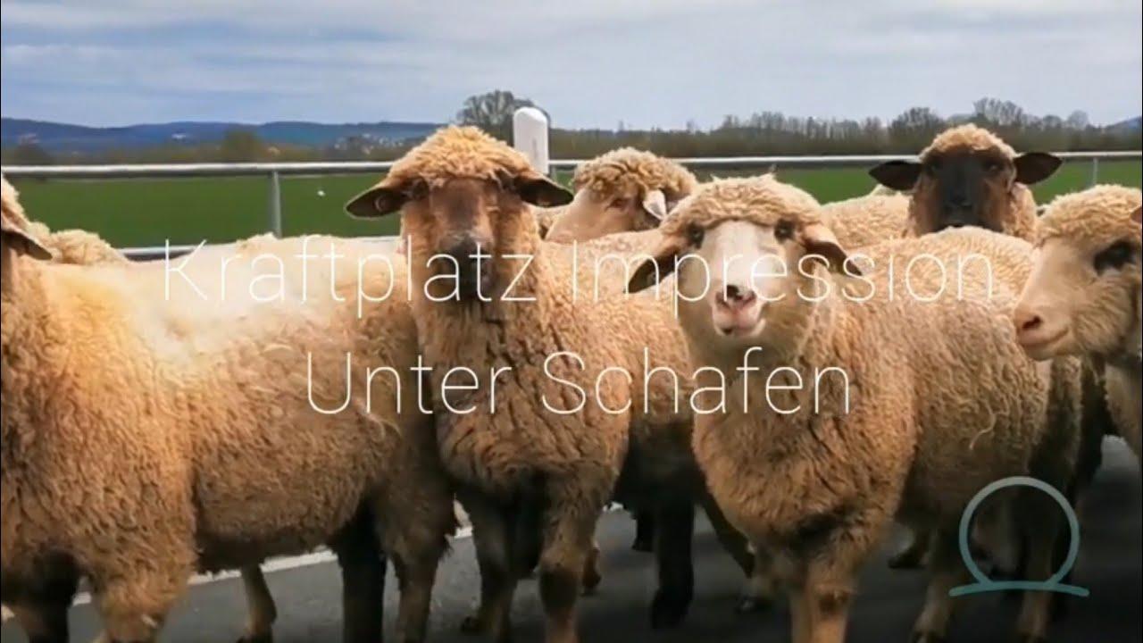 Kraftplatz Impression Unter Schafen