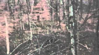 Andy's Buck Video_0001.wmv