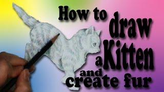 How to draw a kitten and create fur