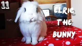 Elric The Bunny - Episode 11 (Animal Vlogs!) New Camera Test - Fuji X10!