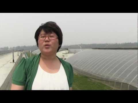 Priva irrigation in solar greenhouse, China