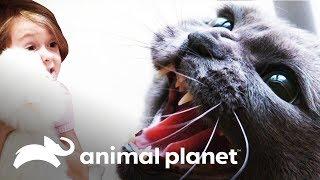 ¡Un gato traumado por una niña de 5 años! | Mi gato endemoniado | Animal Planet