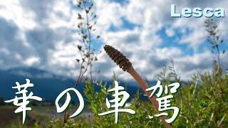 作詞:おちさつき 作曲:西村和彦 iTunes・レコチョク・Google play music等...