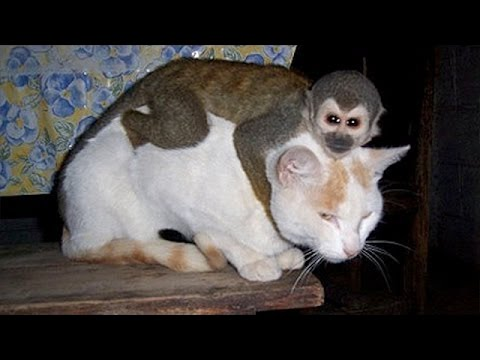 Monkeys annoying other animals – Funny animals compilation
