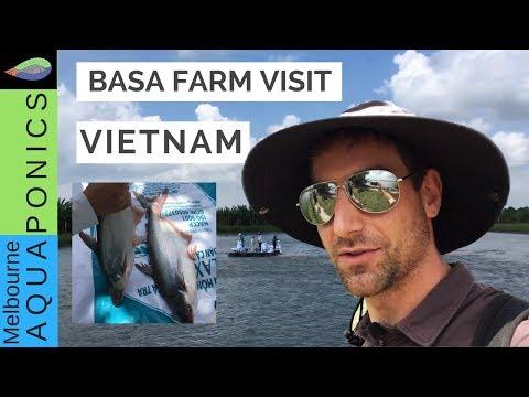 Fish farming Vietnam