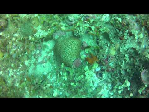 Gulf Dive