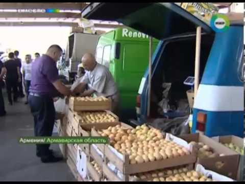 Армянские фермеры могут оставить Россию без абрикосов