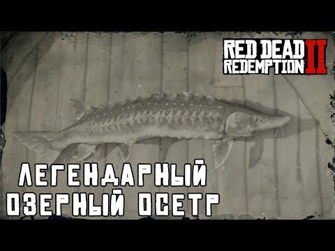 ЛЕГЕНДАРНЫЙ ОЗЕРНЫЙ ОСЕТР - рыбалка в RDR 2