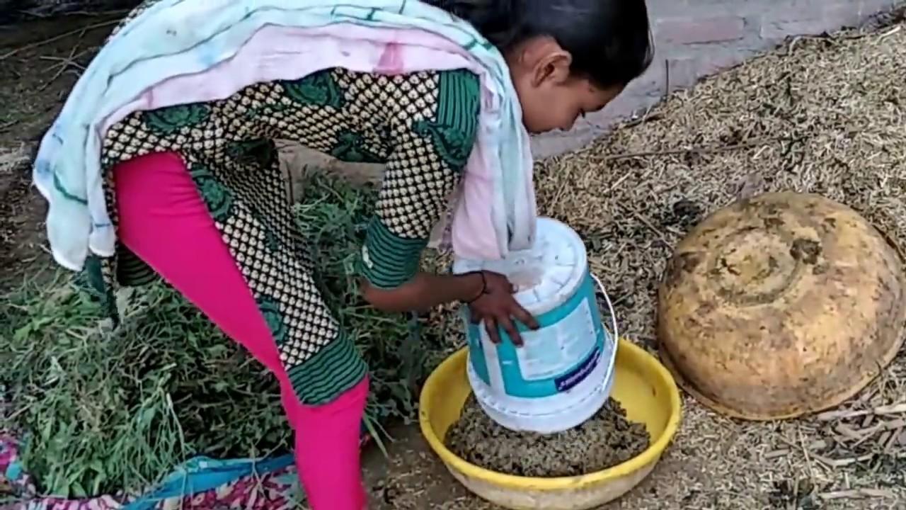 Top Gujarat Village Hot Girl Buffalo Full Lentha All Work Live Video