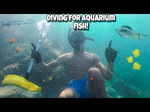DIVING For TROPICAL AQUARIUM FISH!!