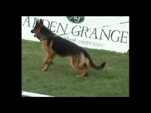 Crufts 2016 German Shepherd Best of Breed Winner - the true story of Catoria