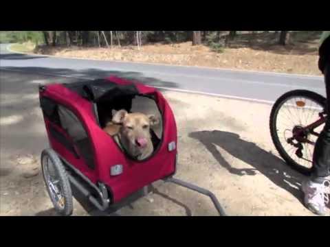Remolque de bici para mi perrogenial  YouTube