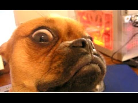 Top 10 Funny Dog Videos - Funny Dogs 2017