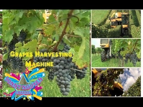 。◕‿◕。Máy thu hoạch Nho - quá hay qúa nguy hiểm ✰ Grapes Harvesting MC☻