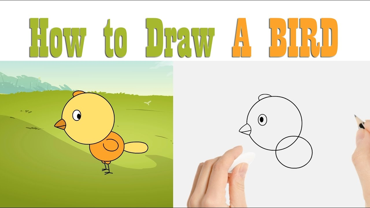 How to Draw A Bird : Fun learning art activity for kids - YouTube