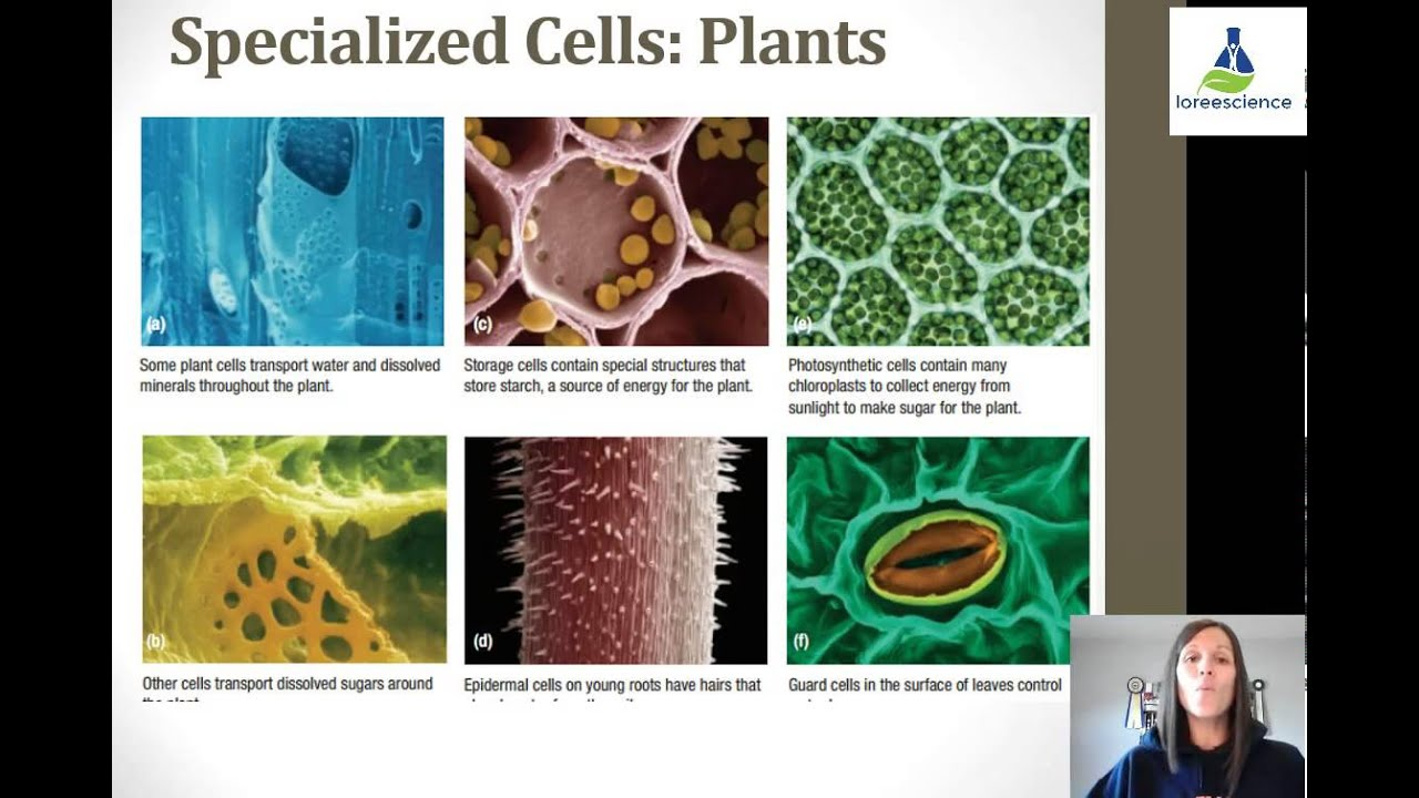 Cell Specialization - YouTube