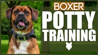 How To Potty Train Your BOXER