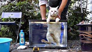 【地域猫】忙しくてちょっとフキフキをサボったらハクちゃんがゴミ猫化していたⅡ【魚くれくれ野良猫】 thumbnail