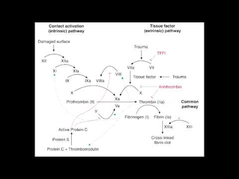 Coagulation, Complement & Kinin Pathway