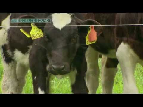 Science Squad on Liver Fluke with Tyndall & Teagasc thumbnail