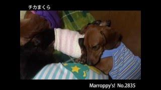 あったかくてきもちいいんですYO Marroppy's! http://members.jcom.hom...