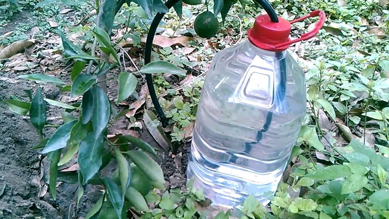 Riego por goteo economico youtube for Aspersores para riego de jardin
