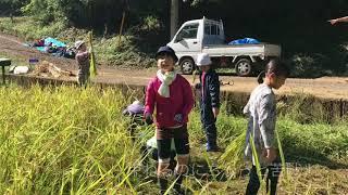 鶴小の5年生が黒川にある田んぼに稲刈りに行きました。