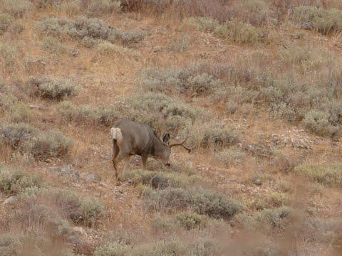 Nevada Late Rifle Hunt 2018