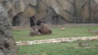 ужасные издевательства над животными в россии