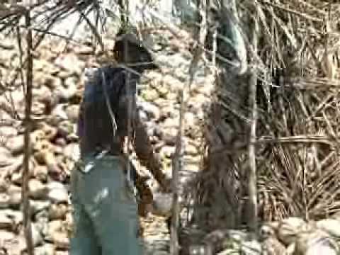 Pemba-Quirimba thumbnail