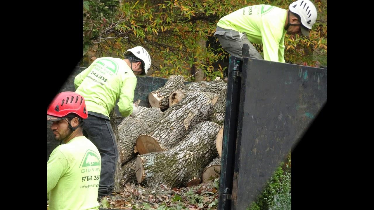 Green Vista Tree Care