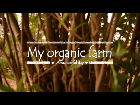 My Organic Farm (A compiled video clip#1)