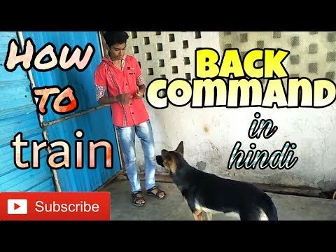 "How to train "" BACK "" command to a dog in Hindi 