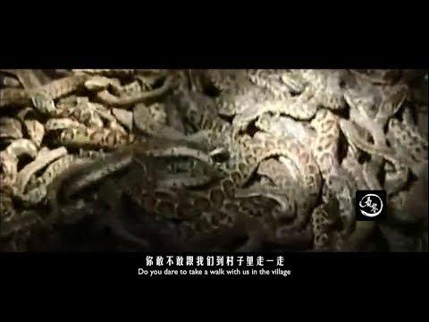 中國小農村盤踞上百萬條蛇!無人敢靠近!|A small village in China captured millions of snakes!