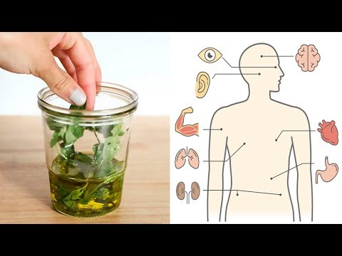 Benefits and Uses of Oregano Oil + How To Make It