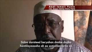 Green Valley Dairy Farm: Ku noqoshada dhulkii hooyo ee Somaliland