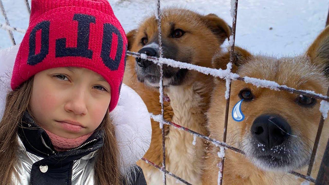 Накормили 500 Собак в приюте / Вики Шоу