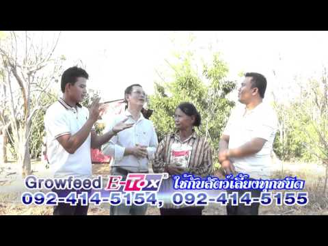 คลิปสัมภาษณ์ผู้ใช้โกรฟีด (Growfeed) กับการเลี้ยงหมู แม่ลำดวน ลพบุรี