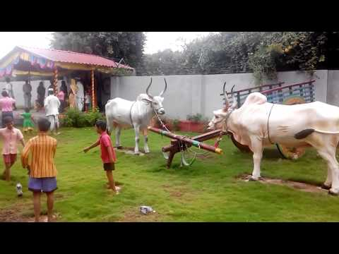 Diwali  Holiday  Sanskruti  Park  Of Kid Amazing Enjoyable Garden In Pune