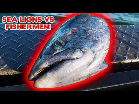 Fishermen VS SEA LIONS. Afterwork FISHING Challenge!
