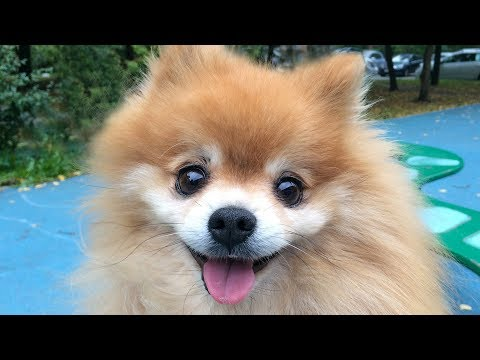 Most Adorable Cute and Fluffy Animals Compilation