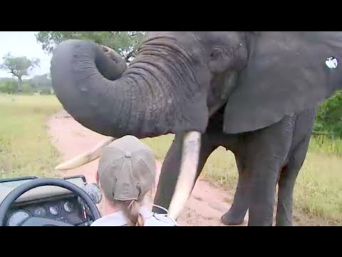 Close Encounters with Elephants