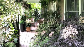 HOUSEPLANT TOUR OF MY PATIOS:  80+ PLANT SPECIES YOU SHOULD KNOW ABOUT!