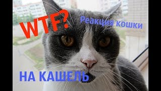 РЕАКЦИЯ КОШКИ НА КАШЕЛЬ\ Ева-бородатая кошка #1