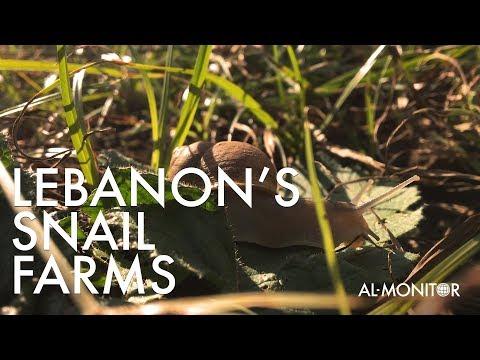 Snail Farms Of Lebanon